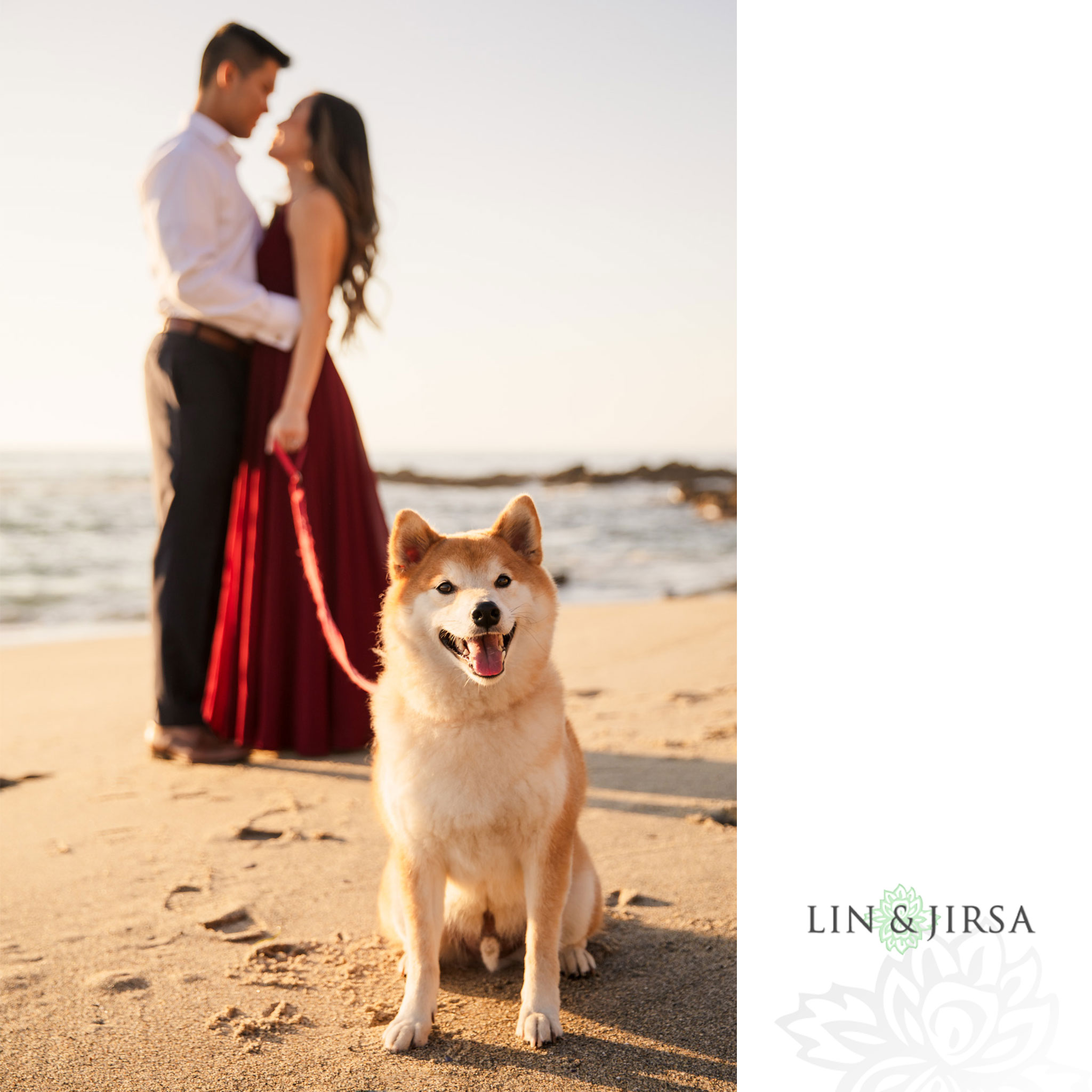 11 pet dog victoria beach engagement photography