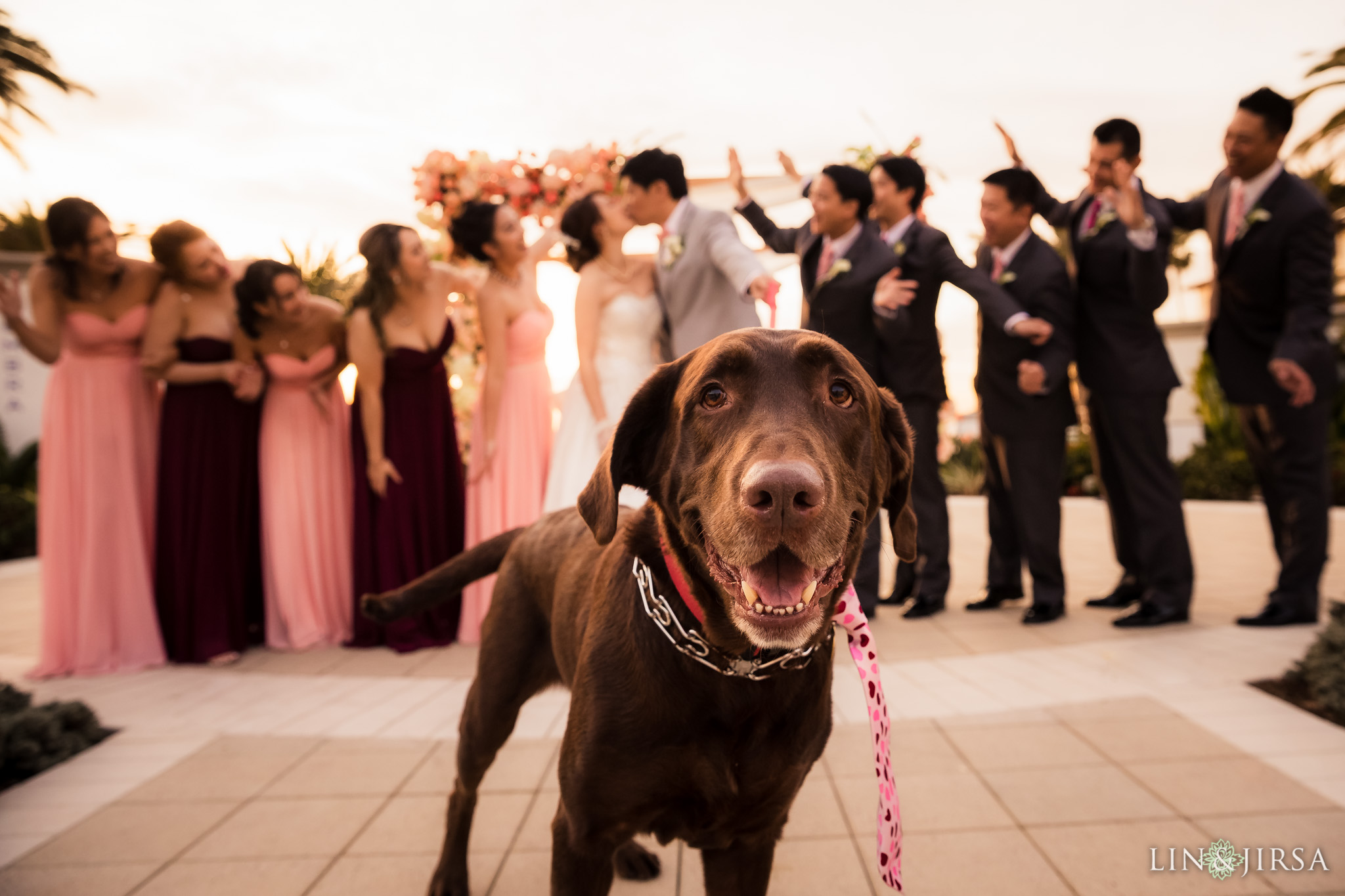 37 monarch beach resort wedding party dog photography